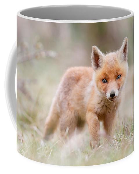 Fox Coffee Mug featuring the photograph Little Fox Kit, Big World by Roeselien Raimond
