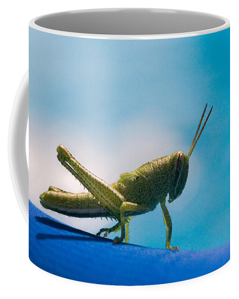 Grasshopper Coffee Mug featuring the photograph Little Grasshopper by Christopher Holmes