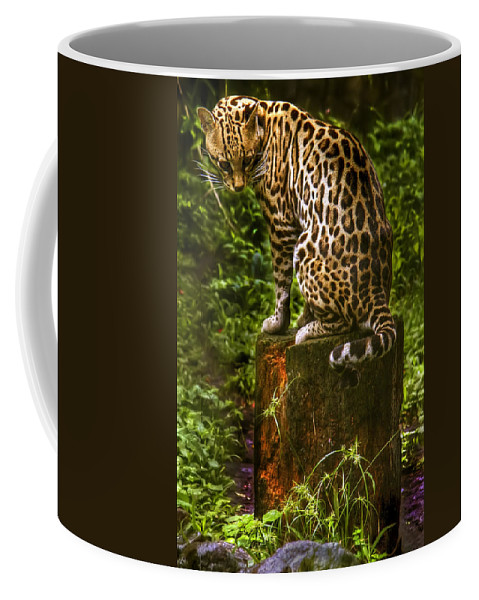 Maguay Coffee Mug featuring the photograph Little Lottie by Dolly Sanchez