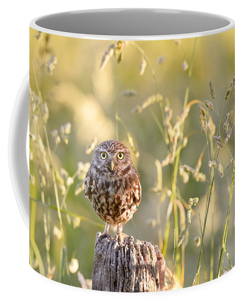 Little Owl Coffee Mug featuring the photograph Little Owl Big World by Roeselien Raimond