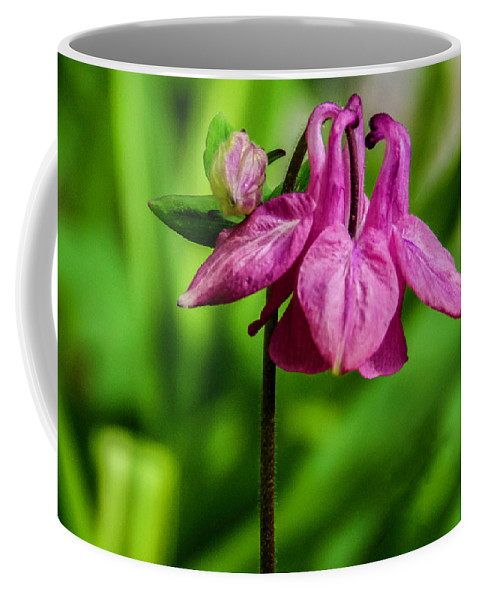Pink Flower Coffee Mug featuring the photograph Little Pink Lamp by Wolfgang Stocker