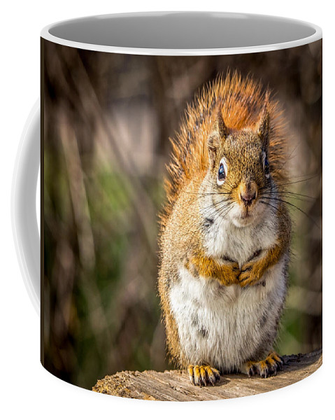 Red Squirrel Coffee Mug featuring the photograph Little Red by Richard Chasin
