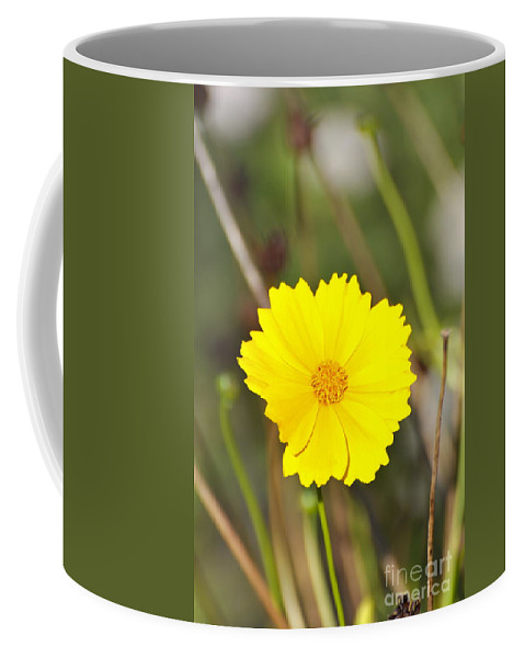 Coreopsis Flower Coffee Mug featuring the photograph Little Sun by Penny Neimiller