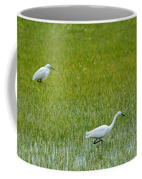 Animal Coffee Mug featuring the photograph Little White Egret by Paulo Goncalves