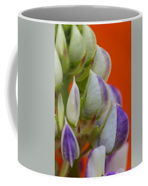 Interior Design Coffee Mug featuring the photograph Lively Lupine by Lisa Knechtel