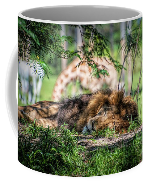Lion Coffee Mug featuring the photograph Living In Harmony - Lion by Jan Mulherin