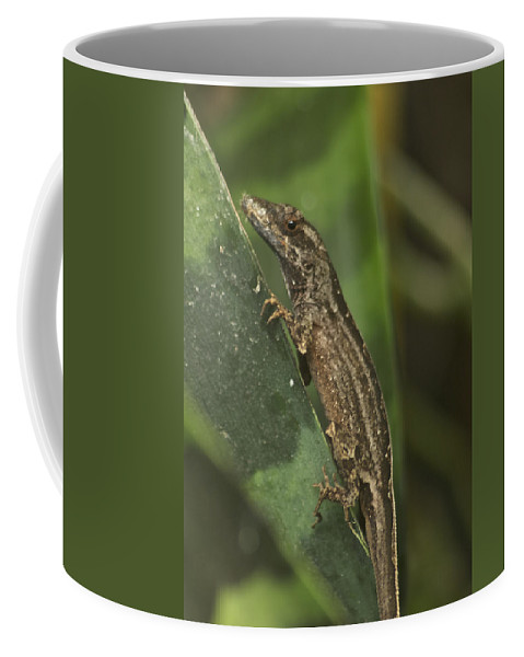 Wildlife Coffee Mug featuring the photograph Lizard 3 by Michael Peychich