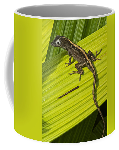 Wildlife Coffee Mug featuring the photograph Lizard 4 by Michael Peychich