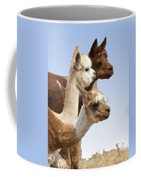 Llama Coffee Mug featuring the photograph Llama's Three by Heather Coen