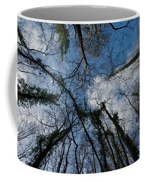Blue Coffee Mug featuring the photograph Loamhole Dingle Treetops by Rawshutterbug
