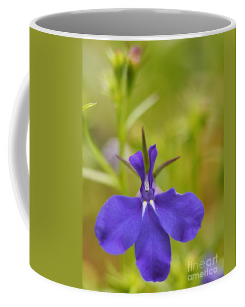 Flowers Coffee Mug featuring the photograph Lobelia On A Brilliant Spring Day 3 by Dorothy Lee