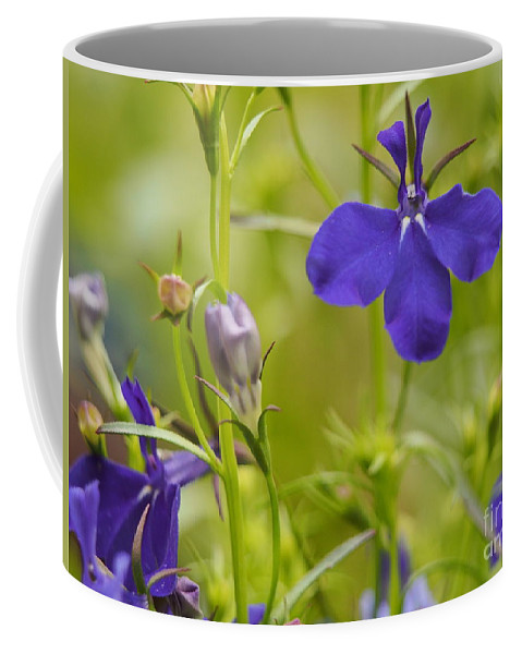 Flowers Coffee Mug featuring the photograph Lobelia On A Brilliant Spring Day by Dorothy Lee