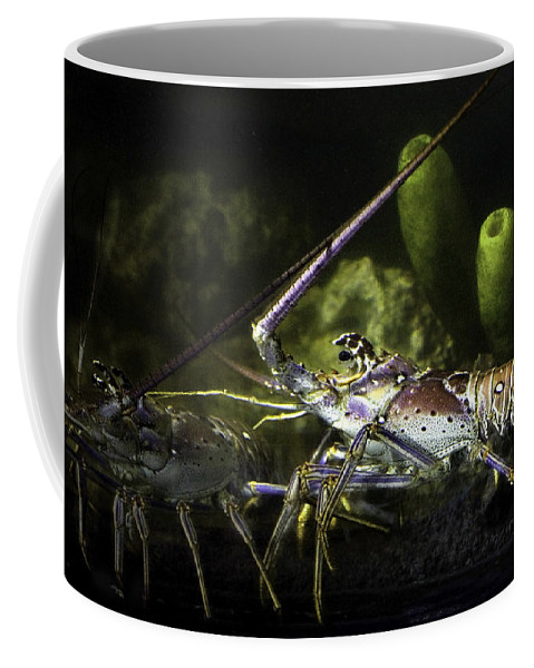 Lobster Coffee Mug featuring the photograph Lobster In Love by Marilyn Hunt