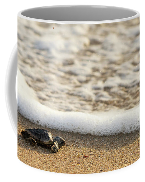 Florida Coffee Mug featuring the photograph Loggerhead Turtle Hatchling 3 Delray Beach Florida by Lawrence S Richardson Jr