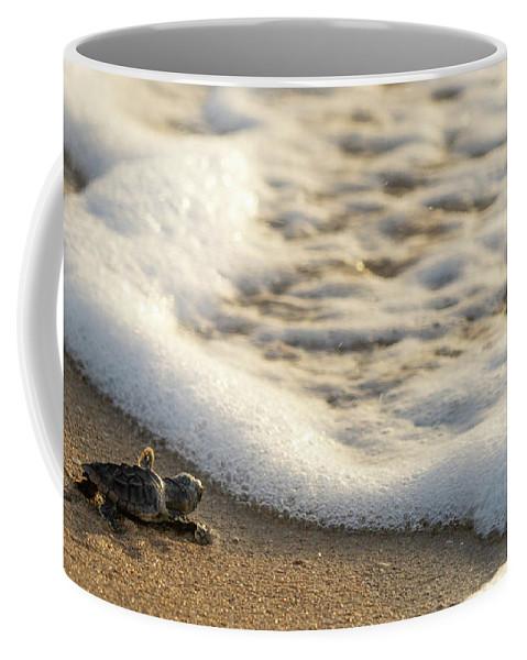 Florida Coffee Mug featuring the photograph Loggerhead Turtle Hatchling 4 Delray Beach Florida by Lawrence S Richardson Jr
