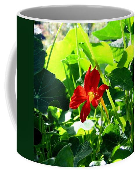 Nasturtium Coffee Mug featuring the photograph Lone Nasturtium  by Will Borden