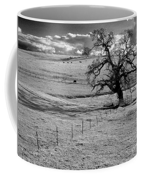 Western Scenes Coffee Mug featuring the photograph Lone Tree And Cows 2 by Norman Andrus