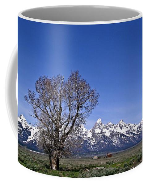 Tree Coffee Mug featuring the photograph Lone Tree At Tetons by Douglas Barnett