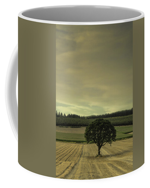 Tree Coffee Mug featuring the photograph Lone Tree In The Field by Don Schwartz