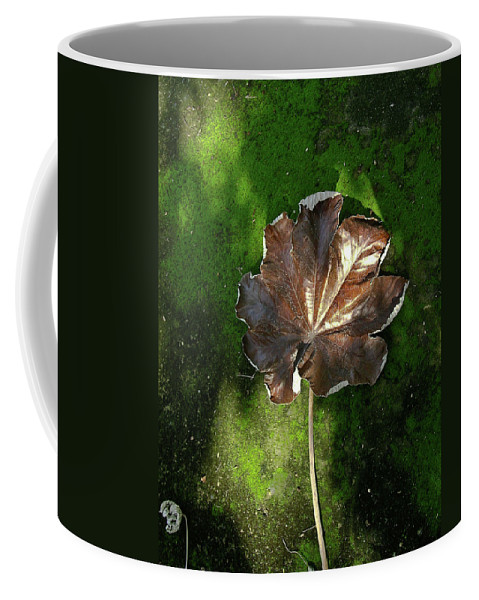 Lonely Coffee Mug featuring the photograph Lonely Leaf On Moss by Douglas Barnett
