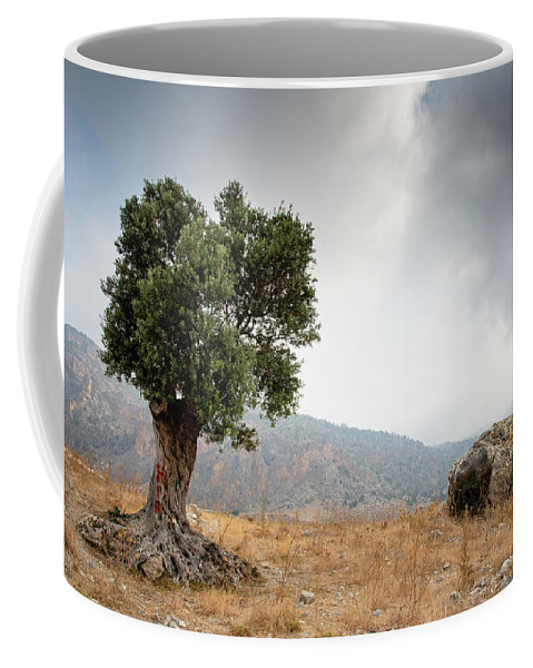 Single Tree Coffee Mug featuring the photograph Lonely Olive Tree And Stormy Cloudy Sky by Michalakis Ppalis