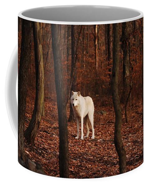 Wolf Coffee Mug featuring the photograph Loner by Lori Tambakis