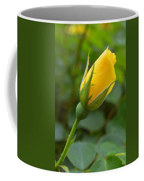 Rose Coffee Mug featuring the photograph Lonesome Bud by Linda Covino