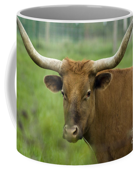 Long Horn Coffee Mug featuring the photograph Long Horn Cow by Louise Magno