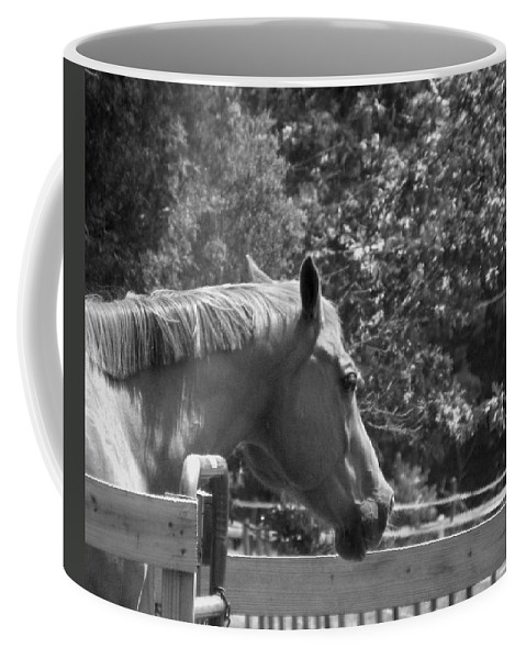 Horse Coffee Mug featuring the photograph Longing by Sandi OReilly