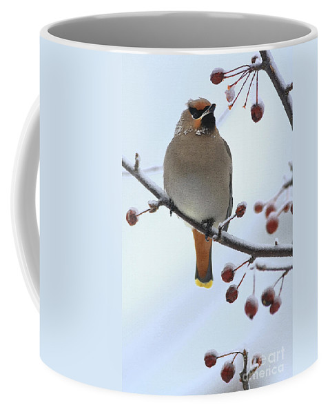 Waxwing Coffee Mug featuring the photograph Look At All The Red Berries by Deborah Benoit