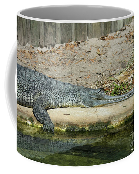 Alligator Coffee Mug featuring the photograph Look At All Those Teeth by Deborah Benoit