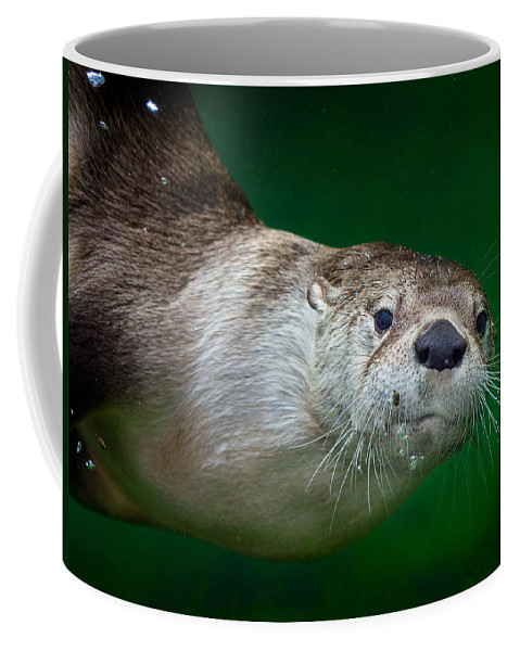 Otter Coffee Mug featuring the photograph Look At Me by Greg Nyquist