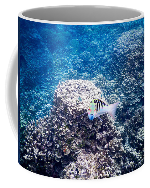 Seascape Coffee Mug featuring the photograph Look Into My Eyes by Michael Scott