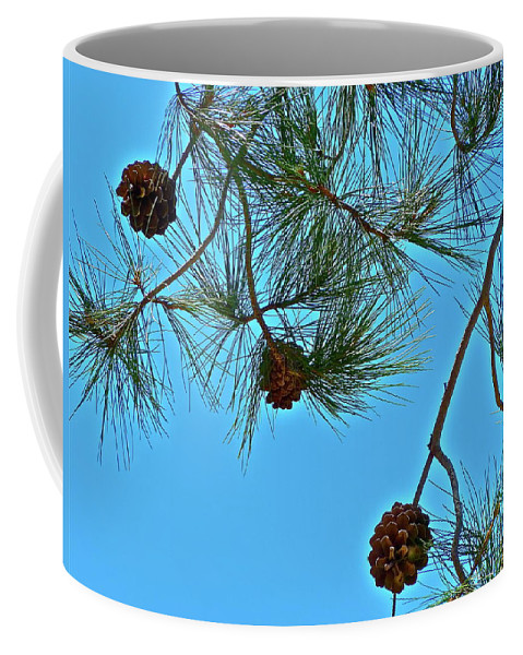 Trees Coffee Mug featuring the photograph Look Up by Diana Hatcher