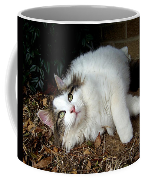Cat Coffee Mug featuring the photograph Look Up by Jai Johnson