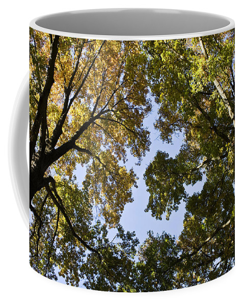 Fall Coffee Mug featuring the photograph Look Up by Teresa Mucha
