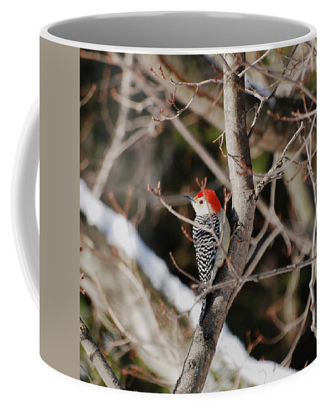 Woodpecker Coffee Mug featuring the photograph Looking For A Place To Peck by Lori Tambakis