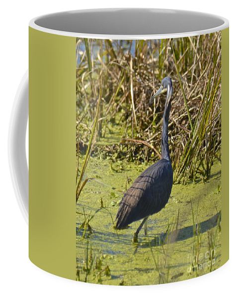 Heron Coffee Mug featuring the photograph Looking For Lunch by Carol Bradley