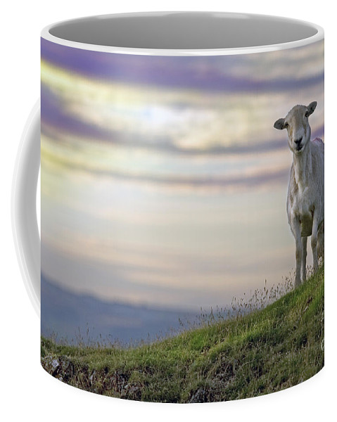 Long Mynd Hill Coffee Mug featuring the photograph Looking From The Above by Angel Ciesniarska