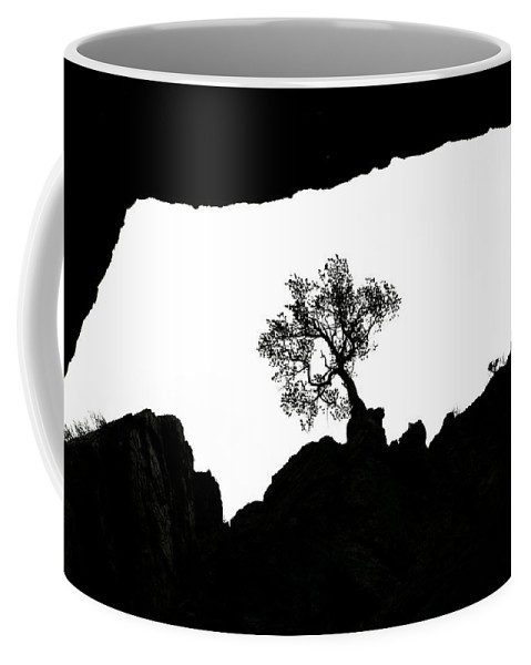 Tree Coffee Mug featuring the photograph Looking Up 2 by Marilyn Hunt