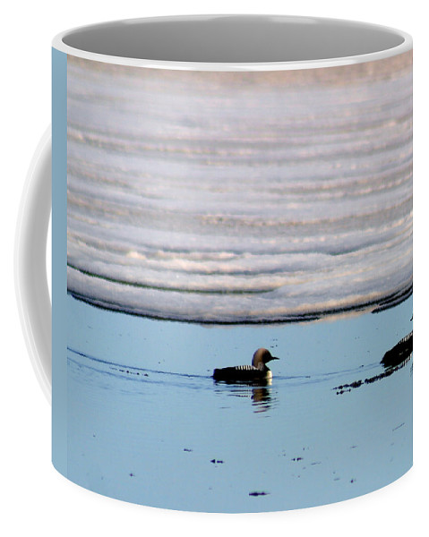 Loons Coffee Mug featuring the photograph Loon On The Arctic by Anthony Jones