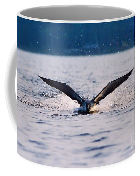 Common Loon Coffee Mug featuring the photograph Loon Take Off Aborted by Sandra Huston