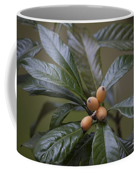 Loquat Coffee Mug featuring the photograph Loquat Fruit by Dale Powell