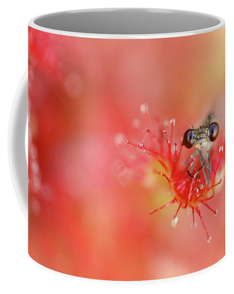 Drosera Rotundifolia Coffee Mug featuring the photograph Lost In Red by Roeselien Raimond