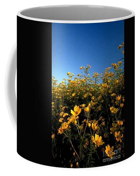 Buttercups Coffee Mug featuring the photograph Lots Of Buttercups Against A Blue Sky by Sven Brogren