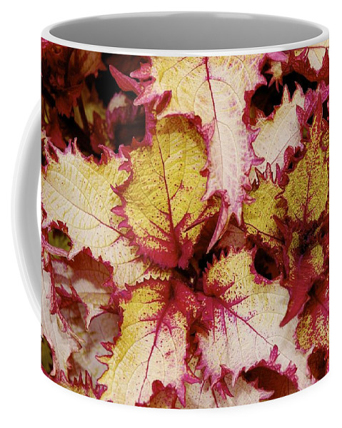 Coffee Mug featuring the photograph Lots Of Pink by Barry Glick