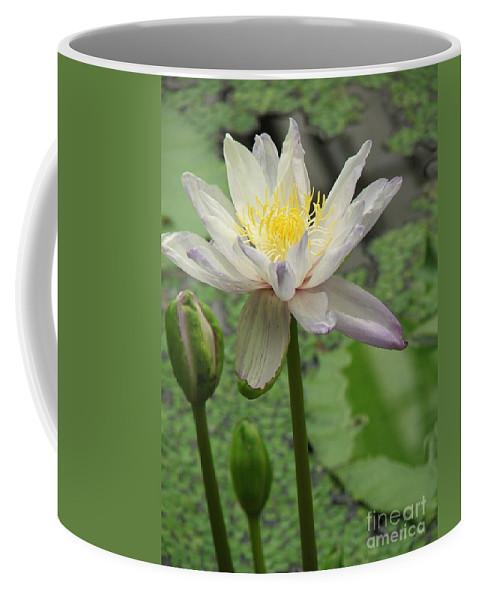 Lotus Coffee Mug featuring the photograph Lotus Blossom by Heather Lennox