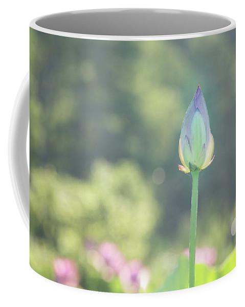 Lotus Coffee Mug featuring the photograph Lotus Bud In Garden by MJ Plocki