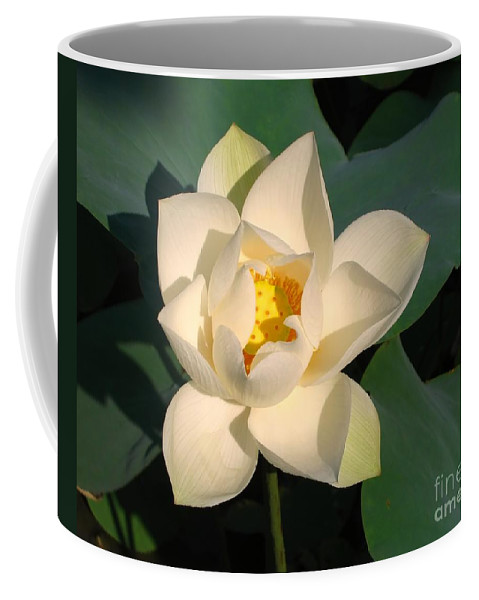 Water Coffee Mug featuring the photograph Lotus Flower by Yali Shi