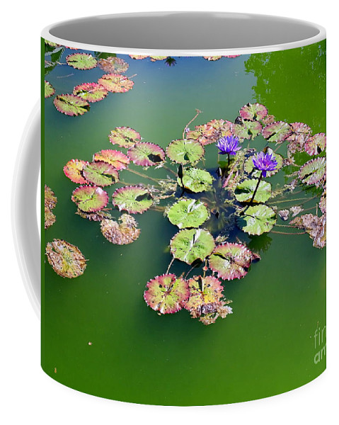 Nature Coffee Mug featuring the photograph Lotus Flowers #4 by Ed Weidman
